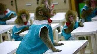 اولین مدرسه میمونها در چین