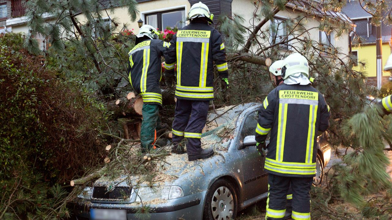 Up a tree which has fallen on a car in Crottendorf, eastern Germany on October 29, 2017