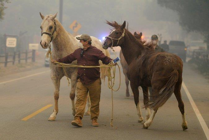 Horses were evacuated in La Cañada Flintridge, Calif., on Tuesday as wildfires burned in the area.