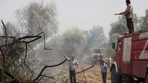 آتش سوزی در جنگلهای ارس پارس آباد مغان