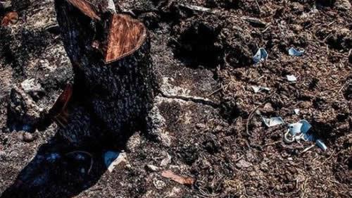قطع درختان، کارکرد مافیای آب