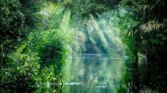 تصویری از جنگل ـ آرشیو