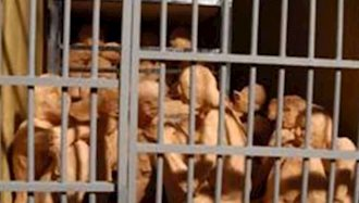 نوروز در زندان