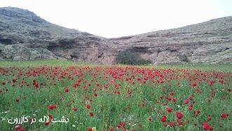 دشت لاله در کازرون