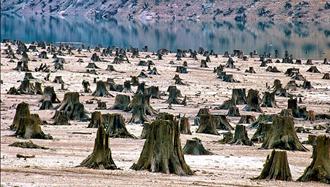 تخریب محیط زیست - عکس از آرشیو