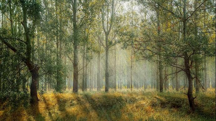 تصویر طبیعت - عکس از آرشیو
