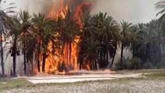 آتشسوزیهای سریالی در نخلستانهای روستای جنگل