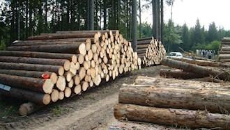 تخریب جنگلها