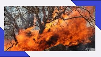 آتشسوزی جنگل توسکستان در گرگان