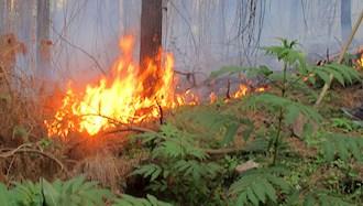 آتشسوزی در جنگلهای توسکستان