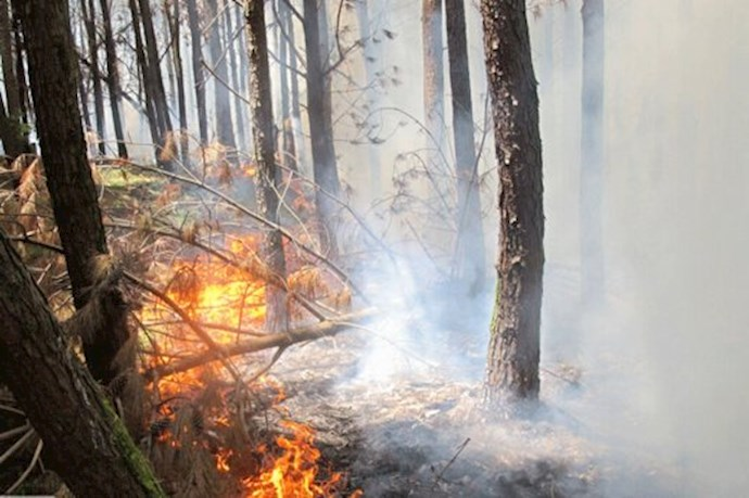 -آتشسوزی جنگل گرگان