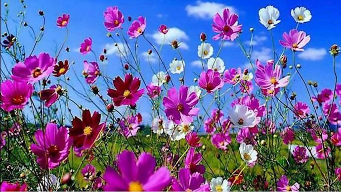 گلهای بهاری