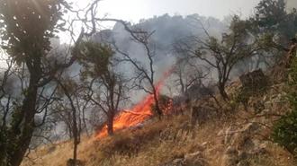 آتش سوزی در جنگلهای گچساران