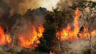 اعتراف به گسترش آتشسوزی در جنگل و نبود امکانات