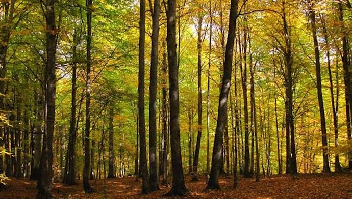 جنگلهای ساری - عکس از آرشیو