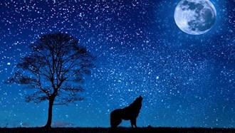به گرگها میمانم