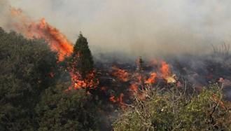 آتش سوزی در جنگلهای گلستان