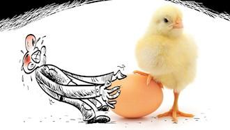 گرانی تخم مرغ چرا و تا به کجا؟