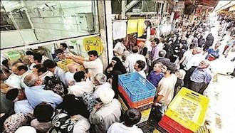 صف مرغ در ایران