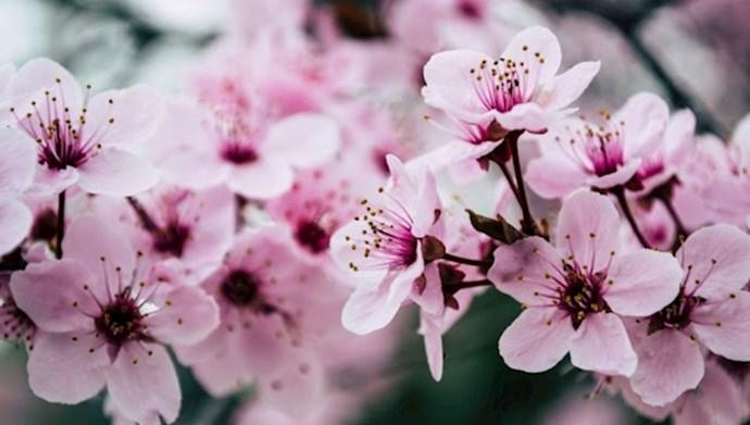 بهار تازه ای آغاز کن