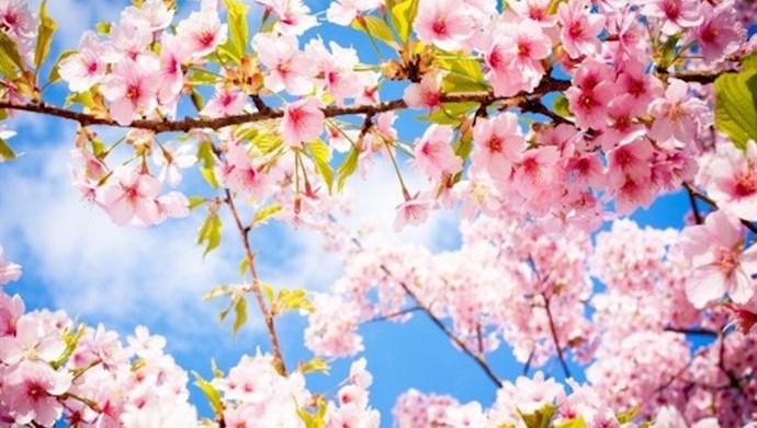بهار میاد