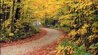 برگریزان پاییزی