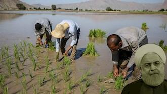 آخوند روحانی و برنجکاری