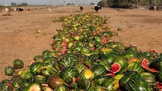 دور ریز محصولات کشاورزی