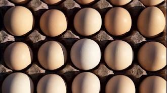 گران شدن تخم مرغ