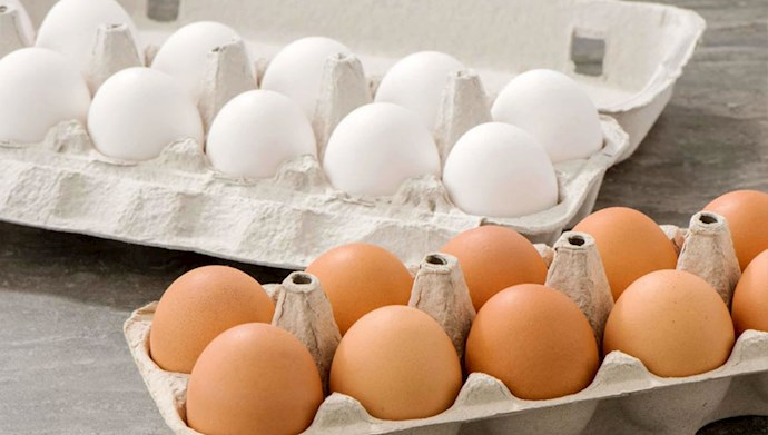 افزایش قیمت تخم مرغ